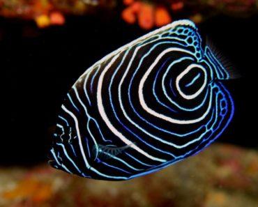 أنواع الأسماك واسمائها بالصور واجملها واغلاها